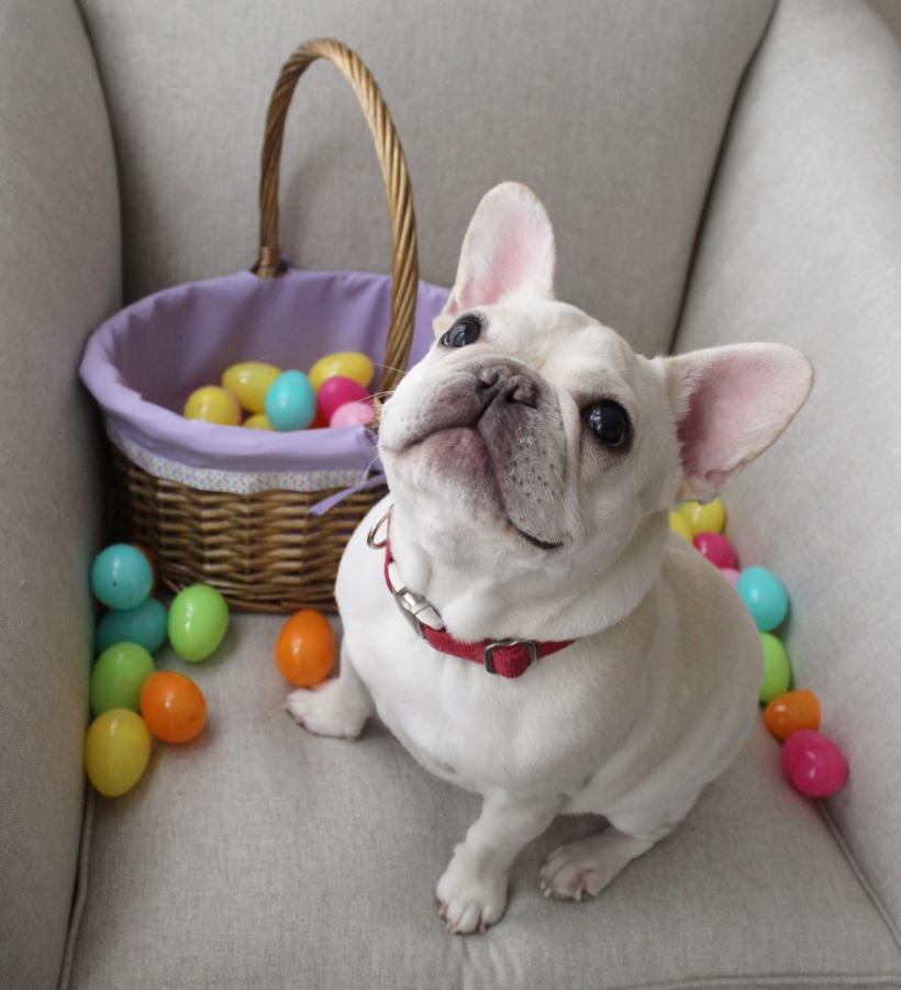 The Easter Bunny a.k.a. Little Bunny Roo Roo