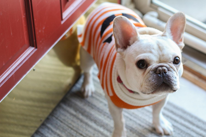 pumpkin-lucy-5942