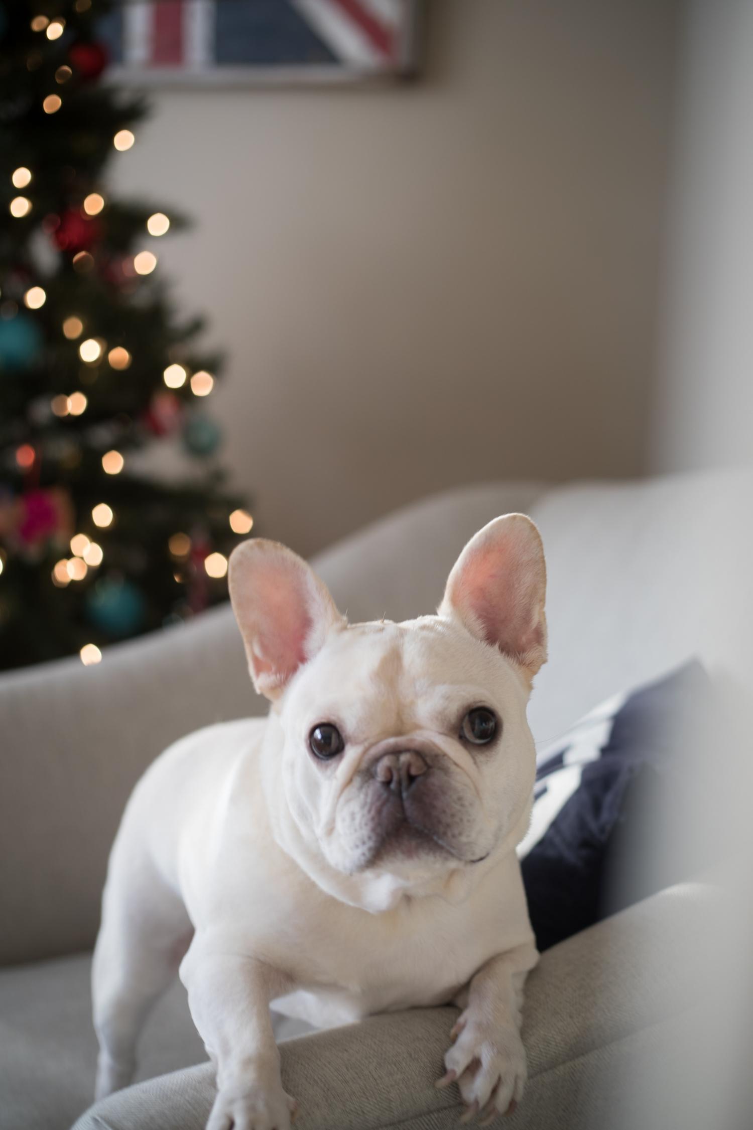 Christmas2018-9767